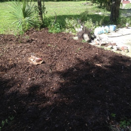 Moved the mulch to kill grass.