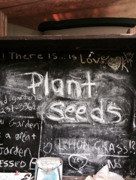 Seeds to plant.
